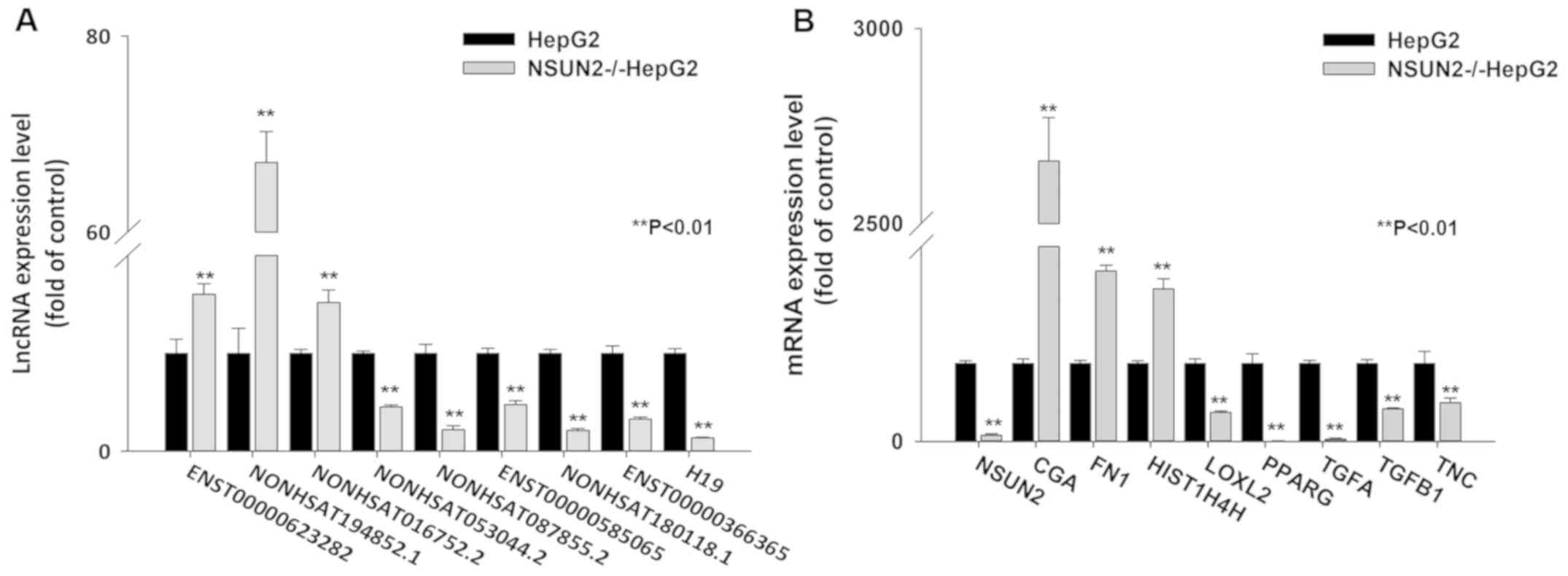 Expression Profiles Of Long Noncoding Rnas Associated With The Nsun2 Gene In Hepg2 Cells