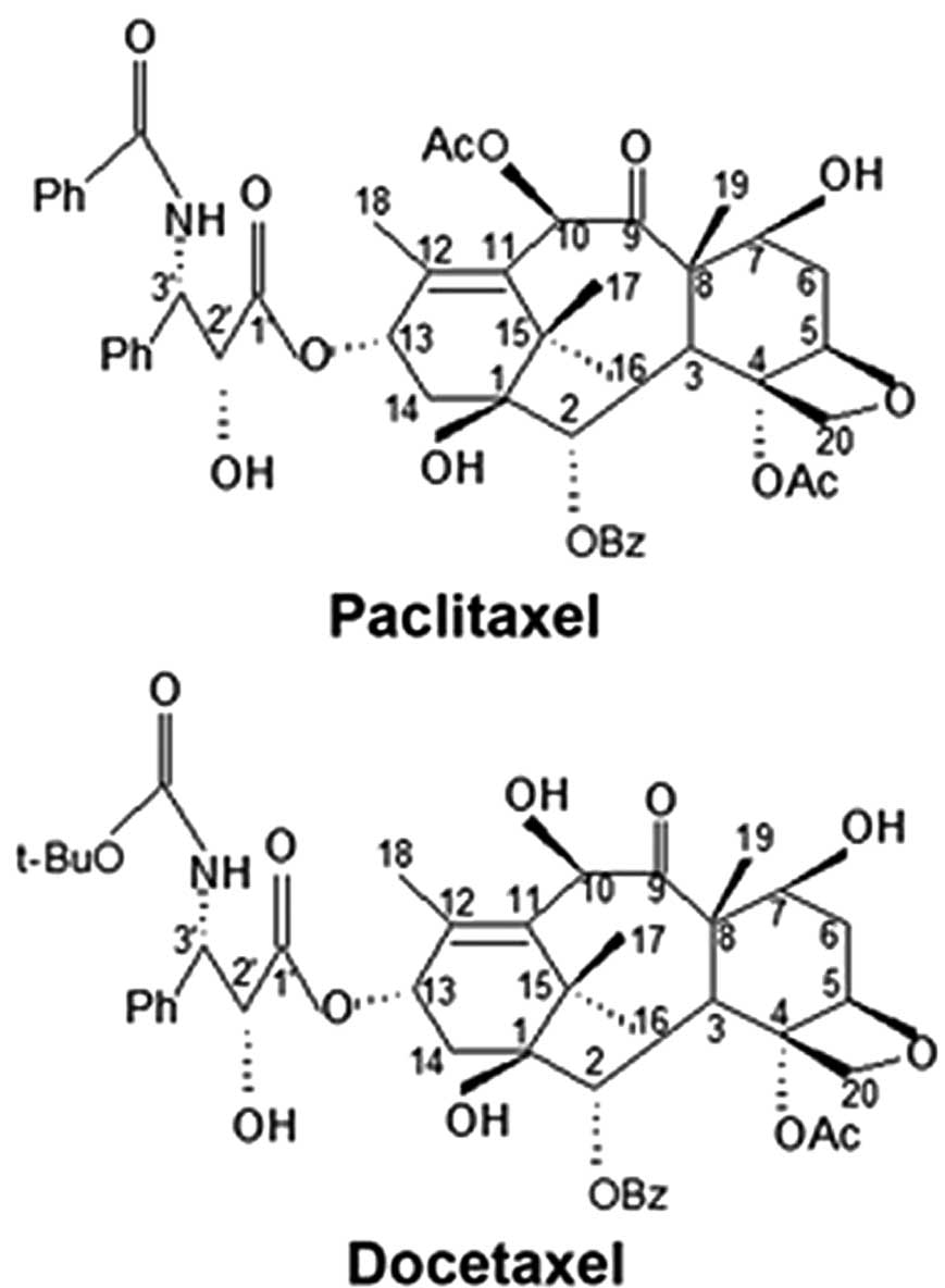 Taxol and Docetaxel - Ancient practices in modern medicine