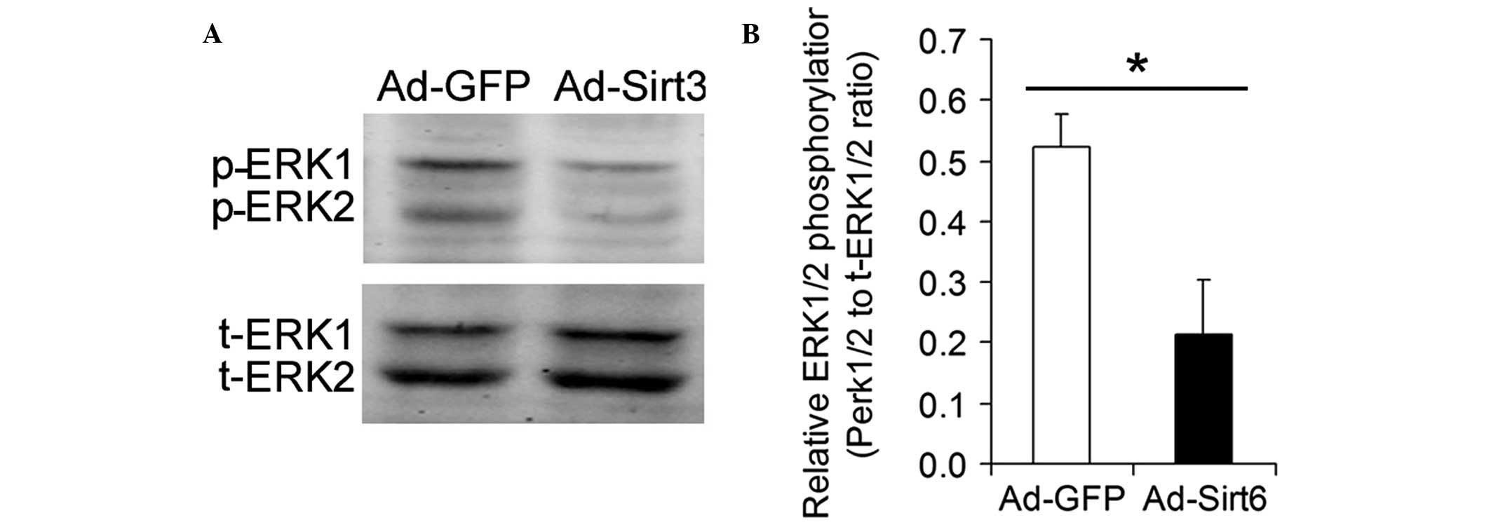 Sirt6 suppresses hepatocellular carcinoma cell growth via inhibiting the extracellular signal‑regulated kinase signaling pathway