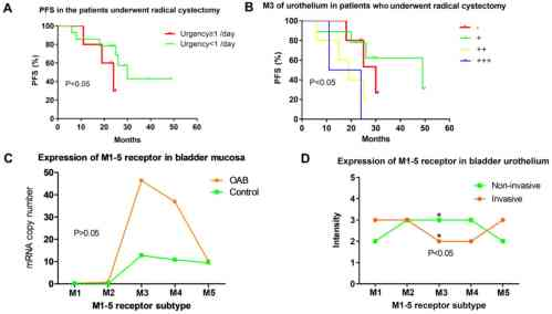 small resolution of  c expression levels of machrs m1 5r in bladder mucosa of patients with oab based on reverse transcription polymerase chain reaction oab group m1 5
