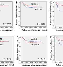figure 3 association between disease free survival rate and expression of cancer stem cell markers and abc transporters kaplan meier disease free survival  [ 2031 x 1364 Pixel ]