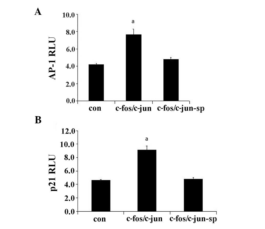 A mimic of phosphorylated prolactin induces apoptosis by