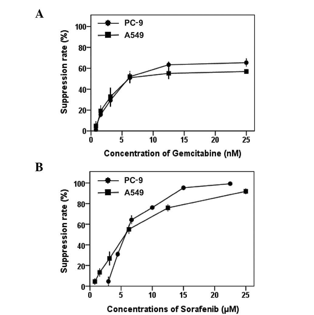 Synergistic Interaction Between Sorafenib And Gemcitabine