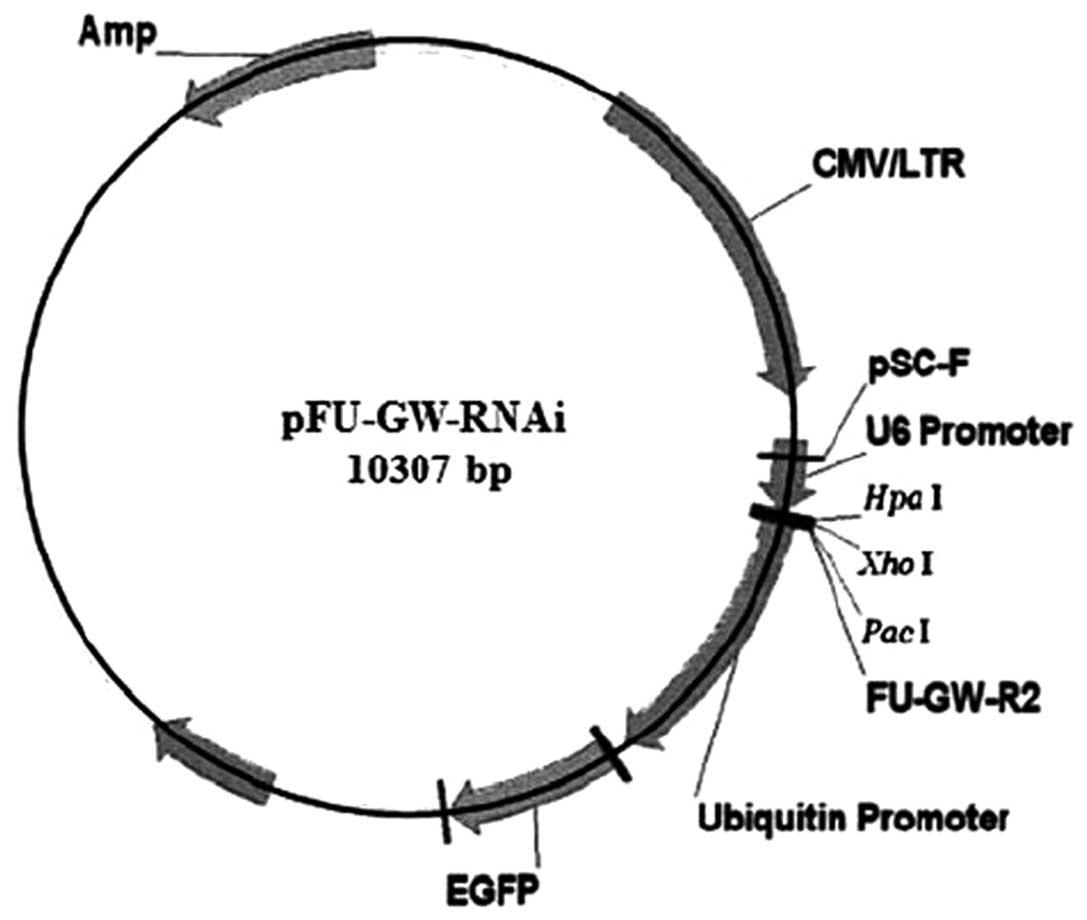 split phase induction motor wiring diagram trailer plug loop engine and