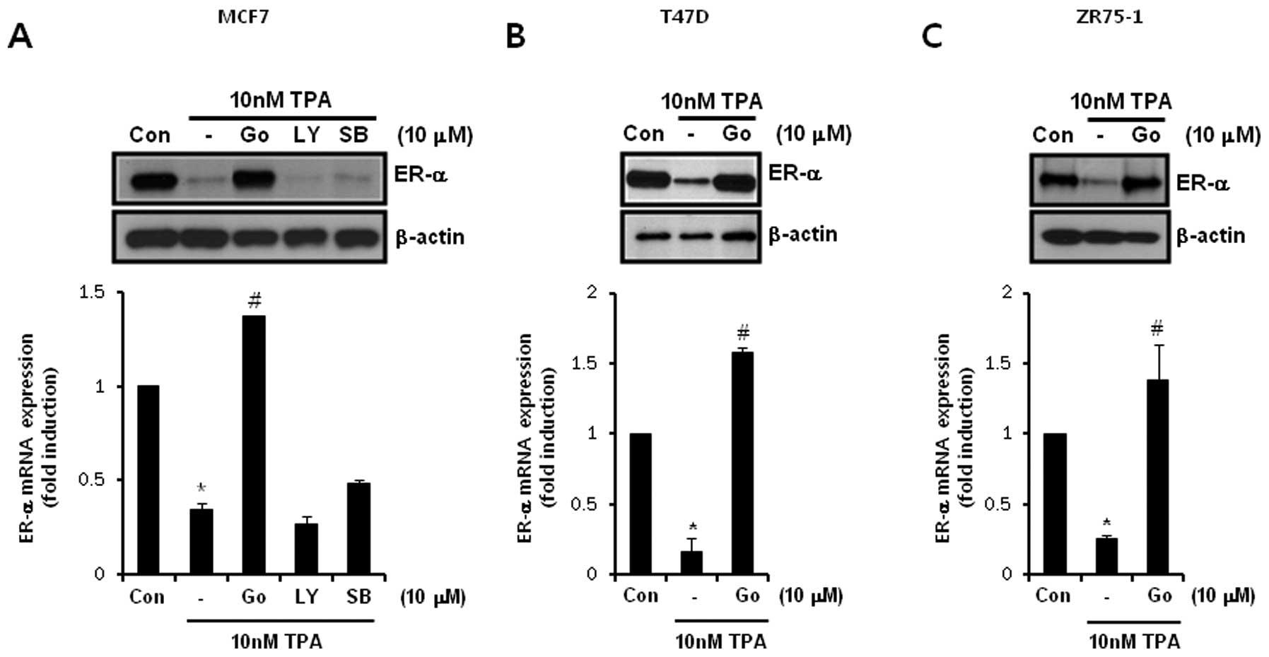 Protein Kinase C Downregulates Estrogen Receptor By