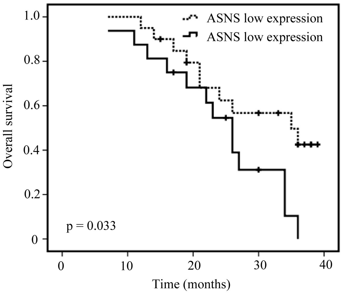 Asparagine synthetase expression and its potential