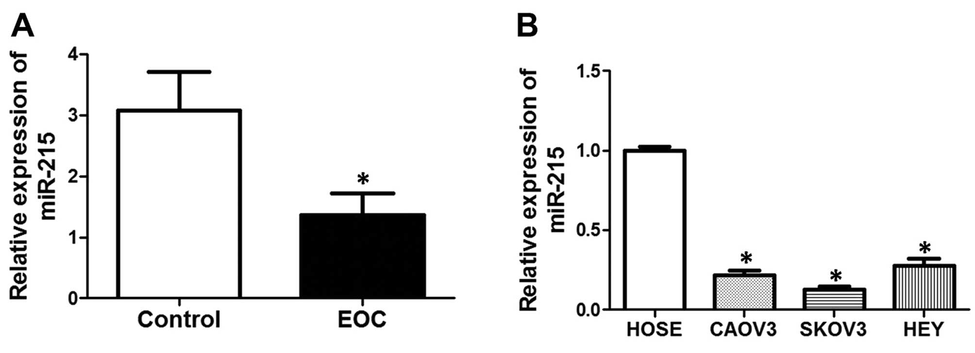miR-215 functions as a tumor suppressor in epithelial