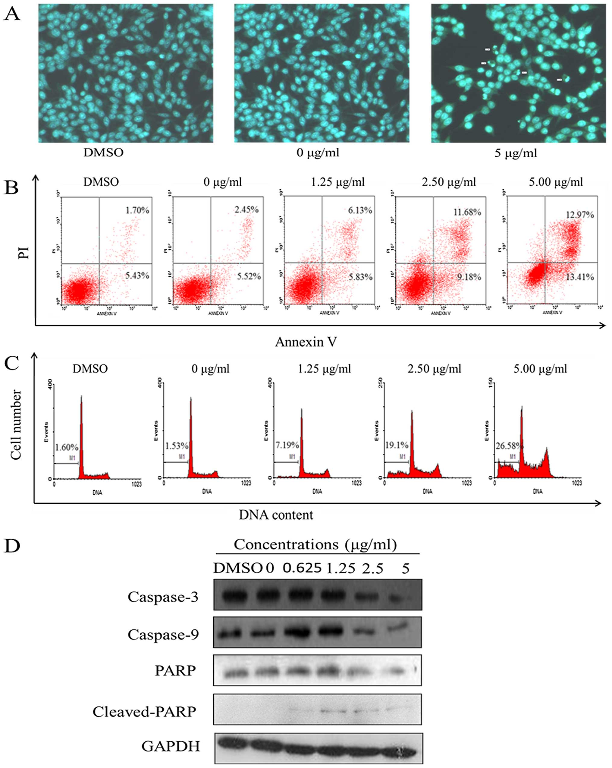 Harmine Induces Cell Cycle Arrest And Mitochondrial Pathway Mediated Cellular Apoptosis In Sw620
