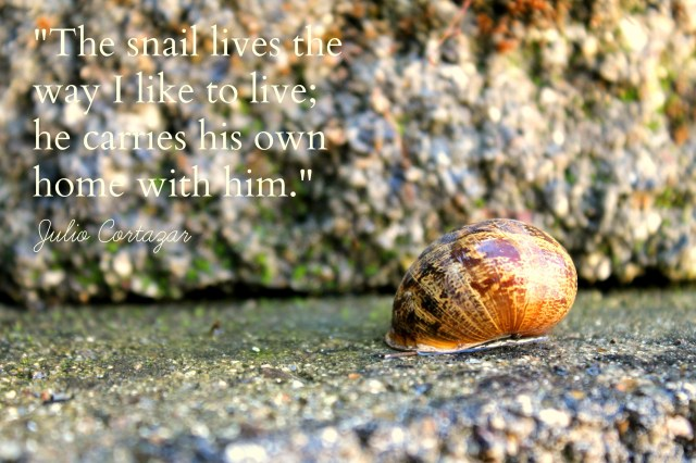 snail with quote