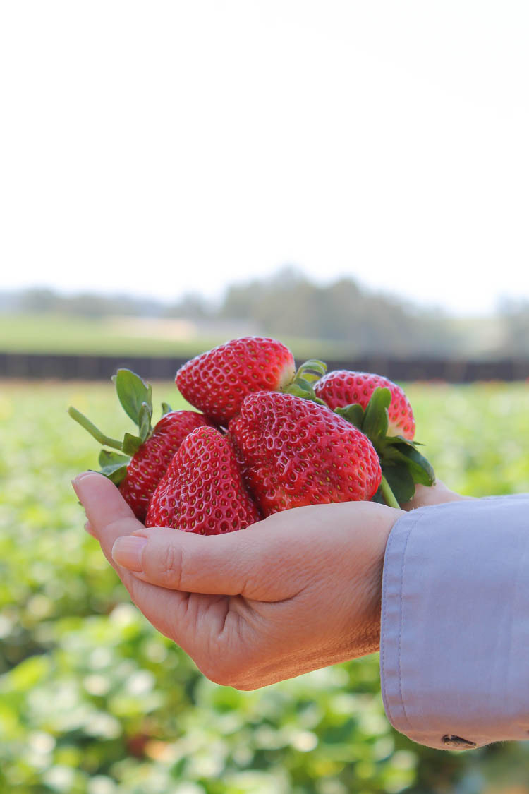 California strawberries | Strawberry, Food, Fresh strawberry