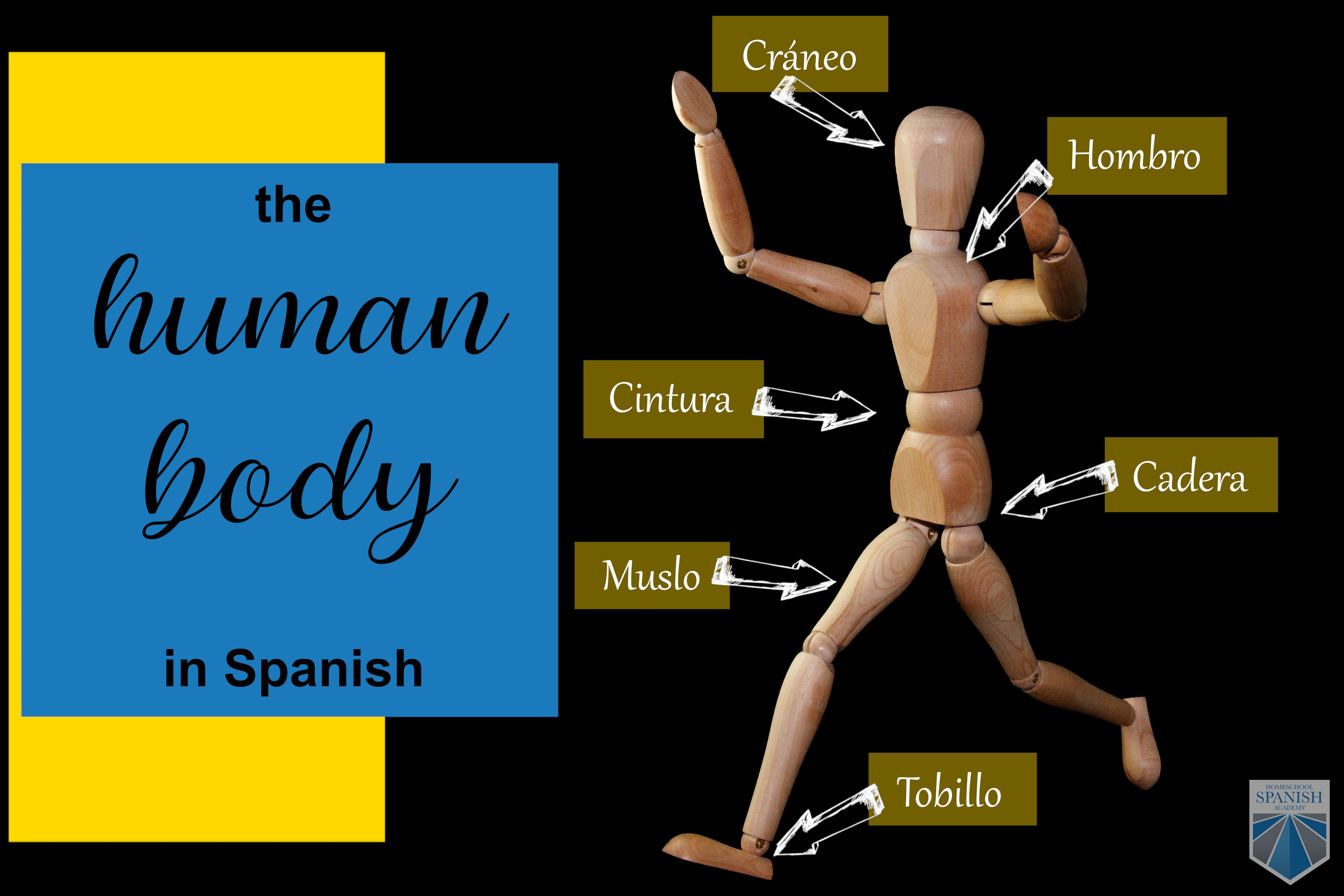 Spanish Body Parts Vocabulary And Practical Implementation