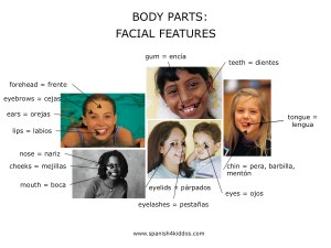 Body parts in English and Spanish