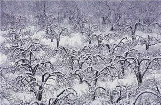 Field of trees covered with snow