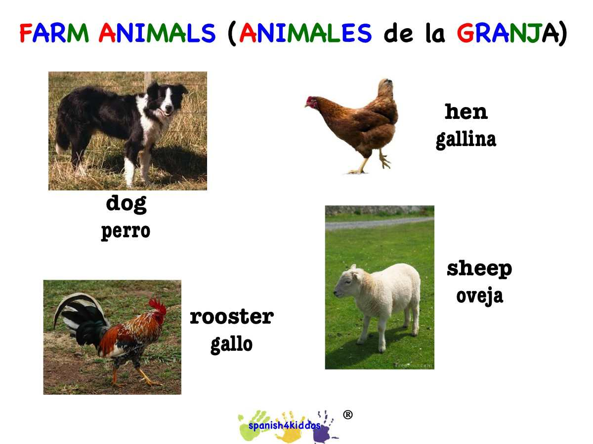 dog  hen  rooster  and sheep  u2022 spanish4kiddos educational