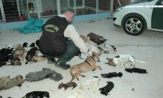 Directrice Asiel Torremolinos Voor Bijna 4 Jaar Naar De Gevangenis Voor Het Doden Van Honden En Katten