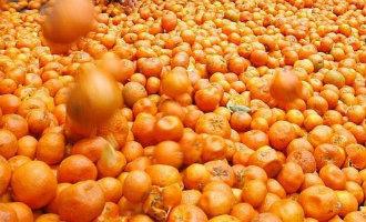 Drugs In Dozen Met Sinaasappels Op Weg Naar Nederland In Beslag Genomen In Antequera