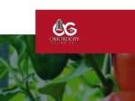 Oxford Luxury Crystalz Recruitment 2020/2021 – Apply Now