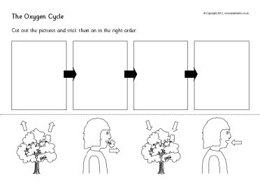 The Oxygen Cycle Cut And Stick Worksheets Sb