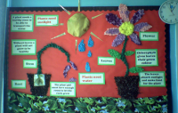 Plants Classroom Display Photo