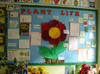 Plant Life Classroom Display Photo - SparkleBox