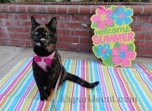 tortoiseshell cat on Cat World Domination Day