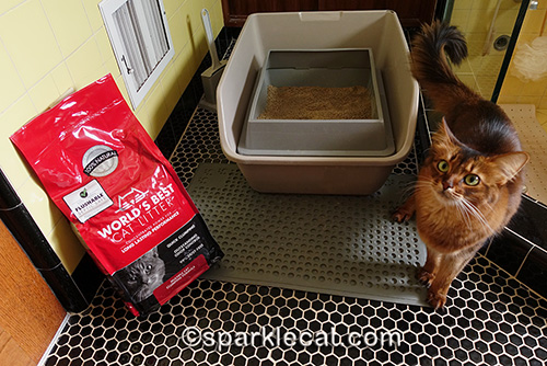 somali cat posing with her litter box and World's Best Cat Litter bag