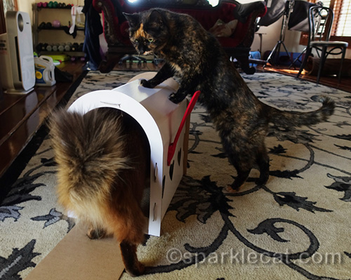 tortoiseshell cat with front legs on mailbox scratcher, while somali cat walks in