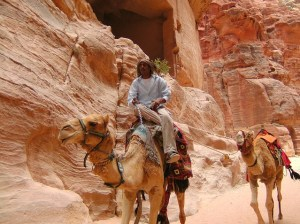 Camels Petra Jordan Lost City