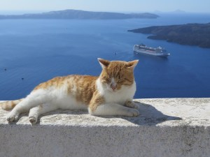 Cat Santorini Greece