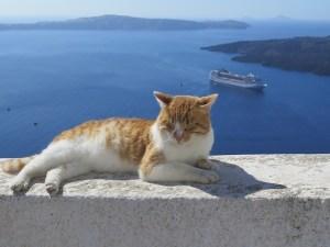 Cat Santorini Greece