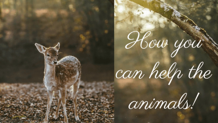 how-you-can-help-the-animals