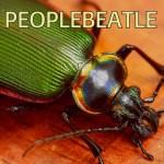 Peoplebeatle
