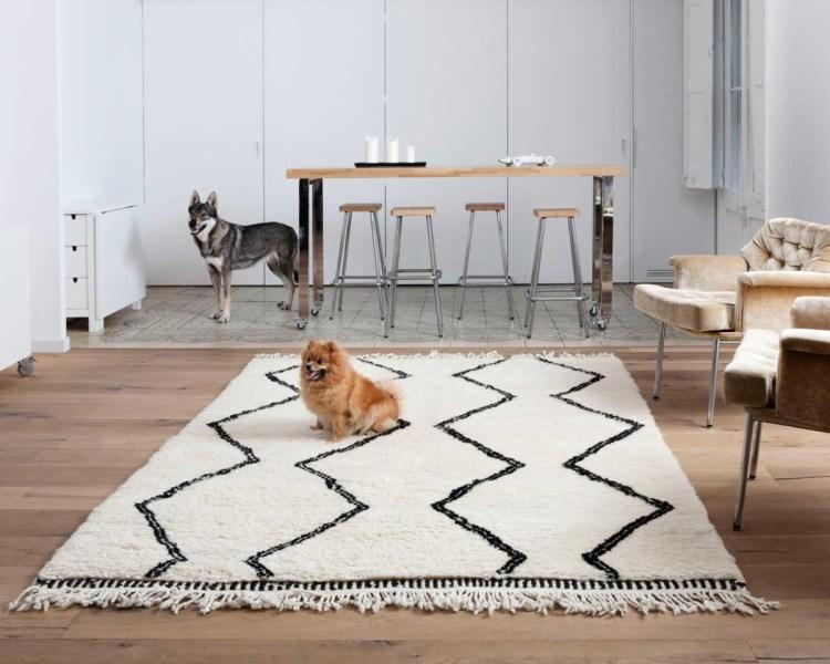 animali-domestici-cane-berber-marocchino-tappeto-casablanca Dove comprare un tappeto di lana artigianale?