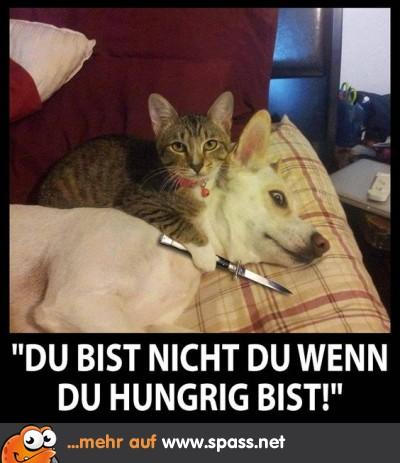 Tiere  Lustige Bilder auf Spassnet