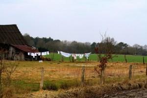 farm-490128_640