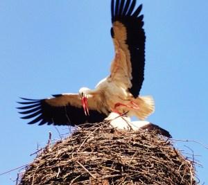 stork-931864_1280