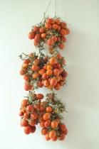 Pomodori invernali
