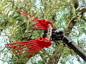 abbacchiatore raccolta olive