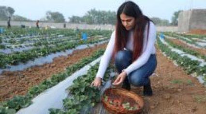 Gurleen Chawla, 'Strawberry Girl of Jhansi' and Founder of Jhansi Organics: SpeakIn