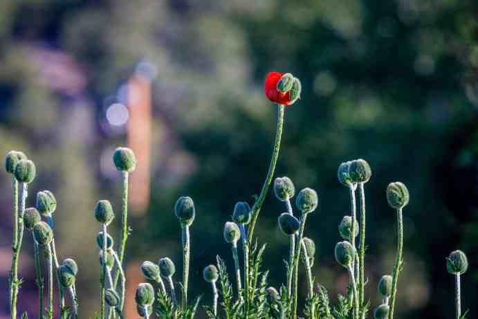 flower-blooming