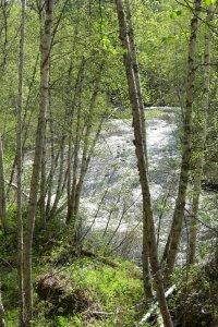 Photo of Hemp Creek