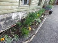 new flower bed and ramp to cattery