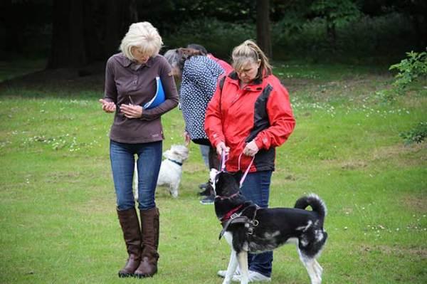 Practical Dog Training - Jackie Murphy