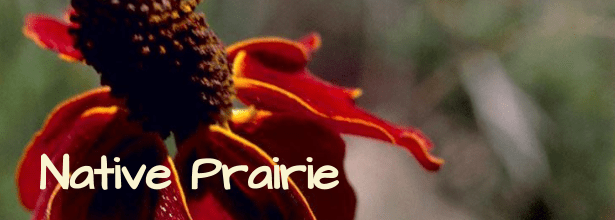 native prairie