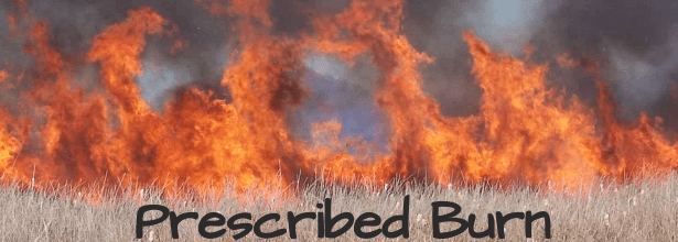 prescribed burn