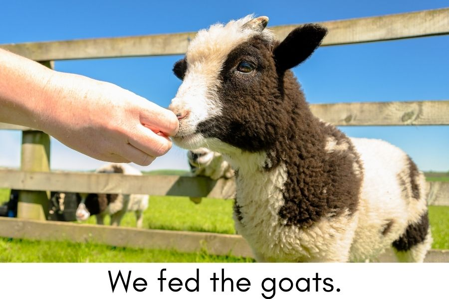 Experience Books for Kids with Autism - feeding the goats