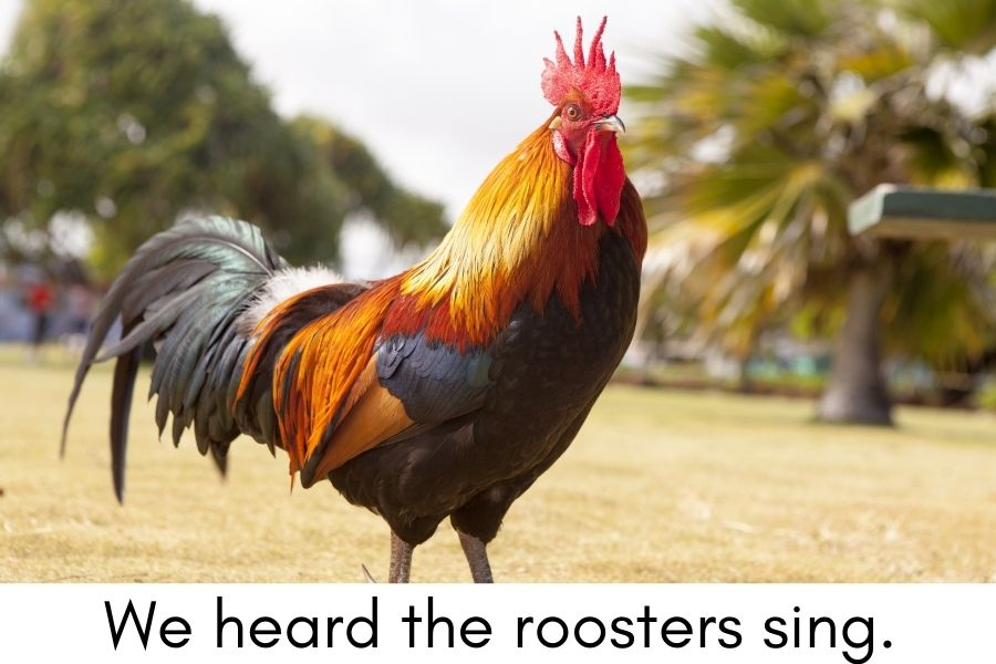 Experience Books for Kids with Autism - a rooster