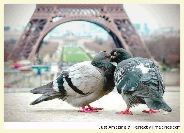Pigeons in Paris. Featured by Special Learning House. www.speciallearninghouse.com.