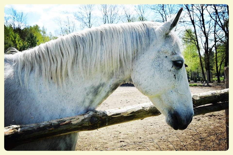 Equine-assisted therapy for autistic children. Featured by Special Learning House. www.speciallearninghouse.com.jpg