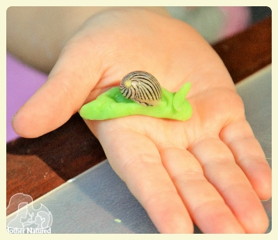 seashell crafts and activities